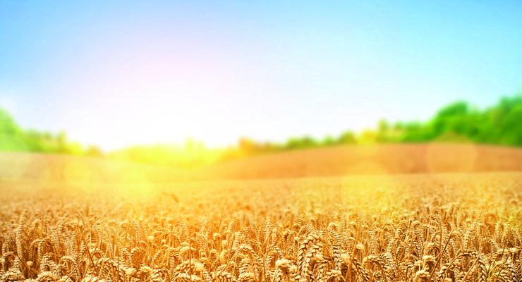Сельхозналог уменьшат