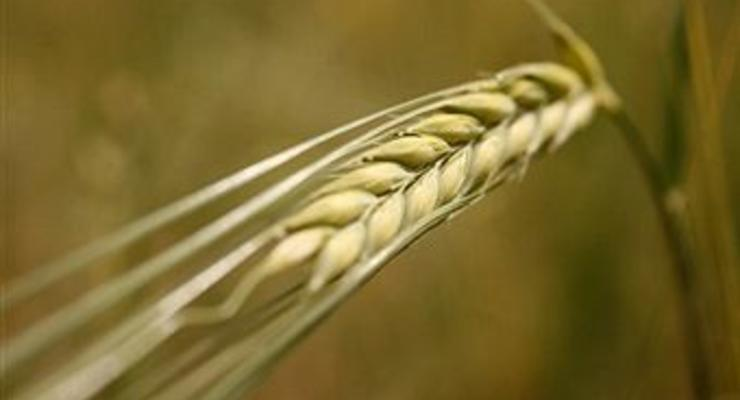 Опубликован закон об отмене пошлин на пшеницу и кукурузу