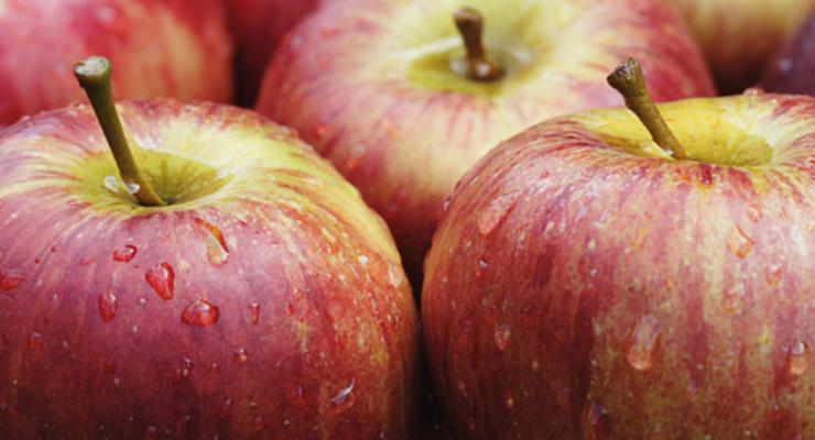 В Швеции усомнились в бесплатности образования из-за яблока