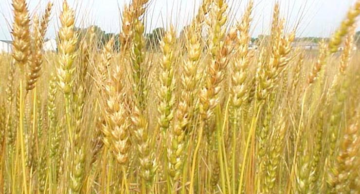 Украина намолотила 34 млн тонн зерна