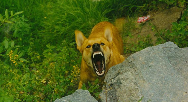 За злых собак будут давать 8 лет тюрьмы
