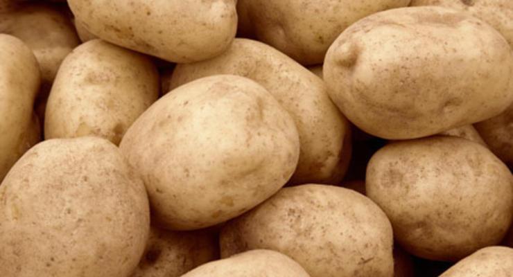Картофель резко подешевел в Украине