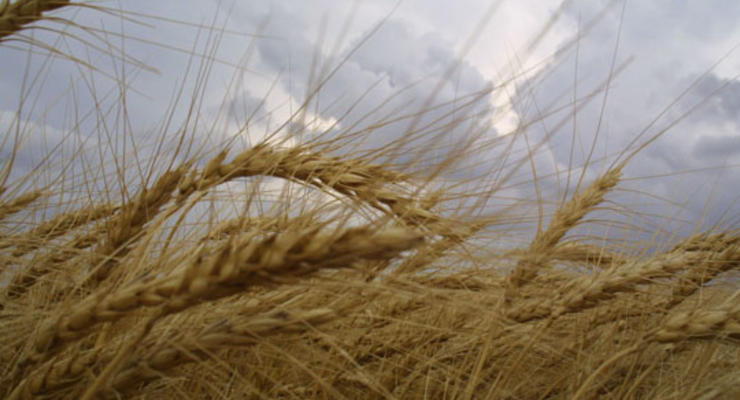 Янукович: Украина войдет в пятерку стран-лидеров по сельхоз производству