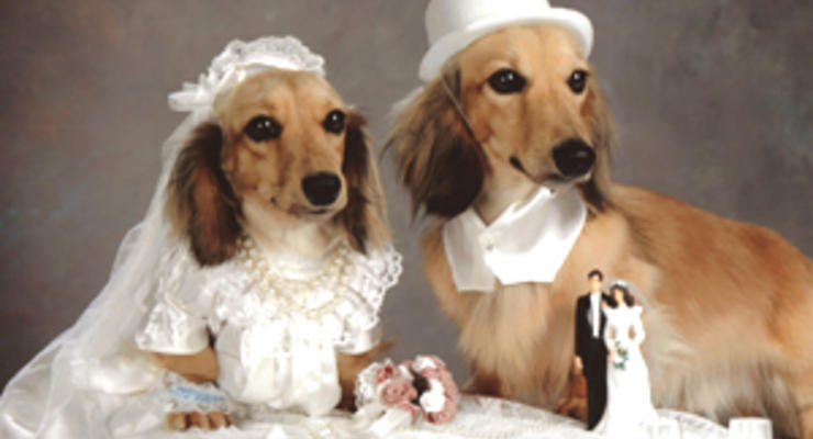 В Киеве можно поженить собак за 1 тыс. долларов