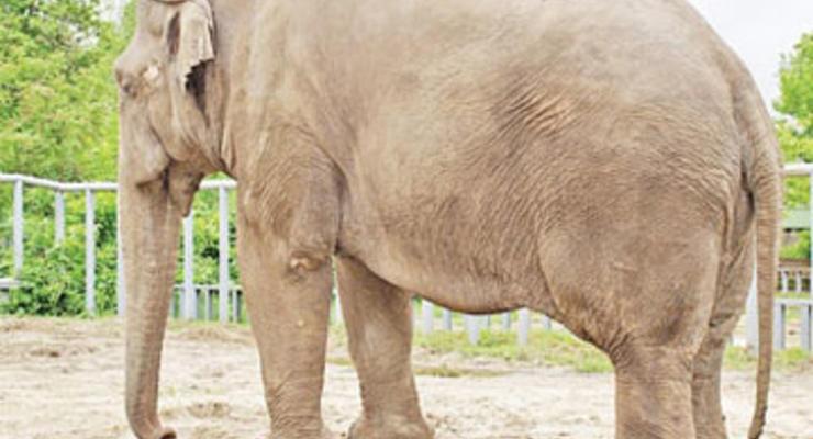 Новые обстоятельства гибели слона Боя