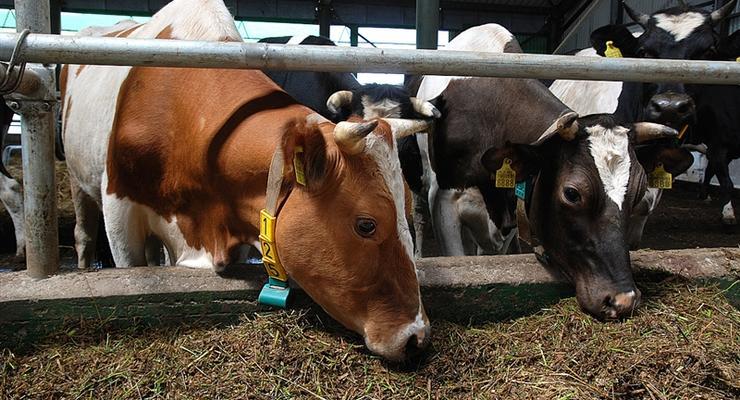 Умная ферма: Как в Украине применяют аграрные инновации