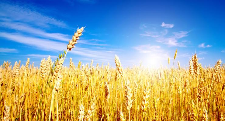 Экспорт зерновых в 2016-2017 годах будет около 40 млн т - Кутовой