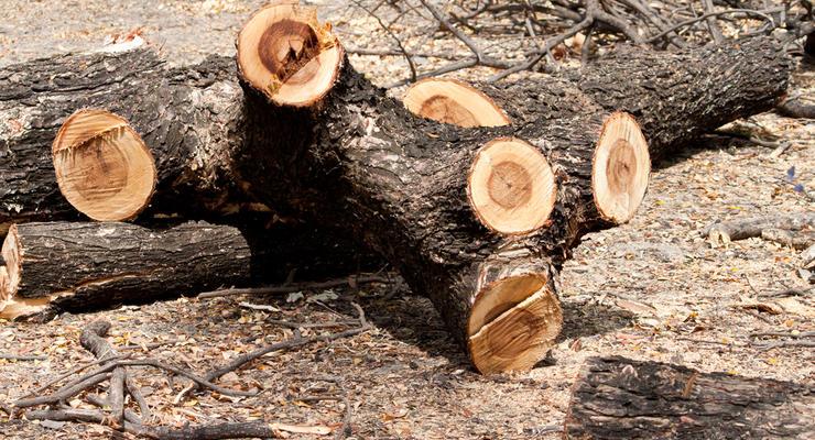 В Украине выросли объемы незаконной вырубки лесов
