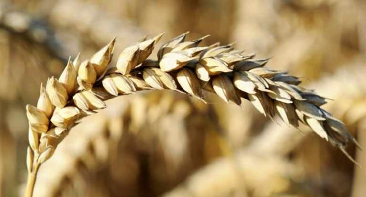 Россия обнулила пошлину на пшеницу