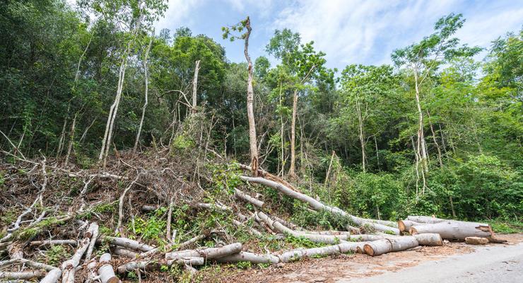 Сейчас леса растут быстрее, чем их рубят - Минагрополитики