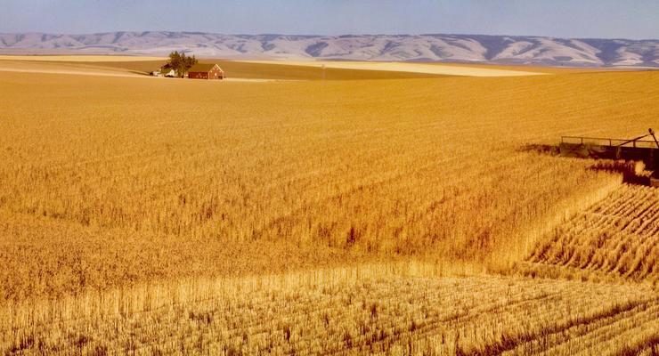 Американская CHS выделит украинским фермарам 50 миллионов на посевную