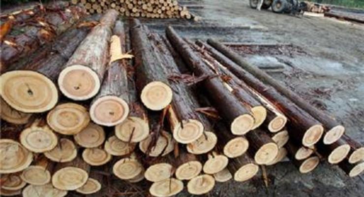 Евросоюз требовал отмены моратория на экспорт леса-кругляка