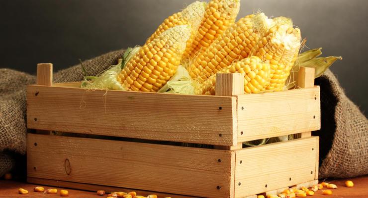 Импорт семян кукурузы в Украину вырос в 37 раз