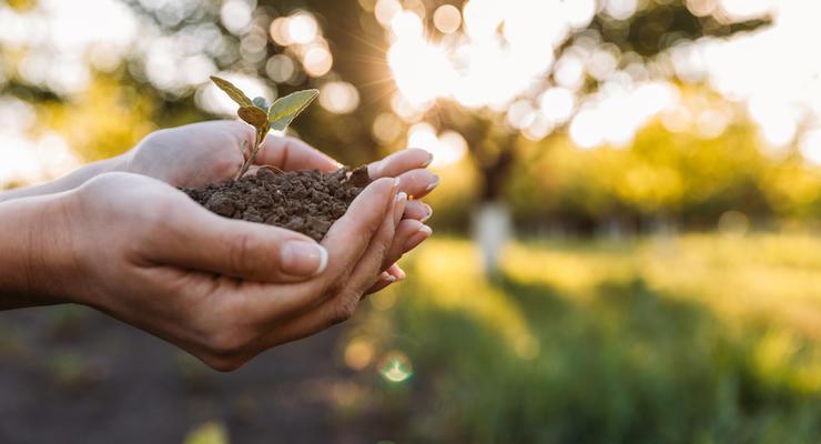 Земельный налог 2017: кто, когда и сколько должен заплатить