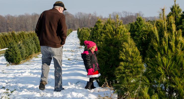 Сколько стоит новогодняя елка в Украине