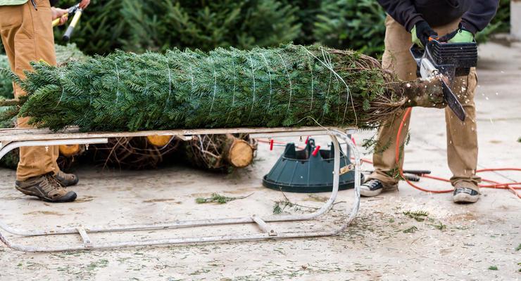 Сколько стоит купить елку в Украине на Новый год 2018