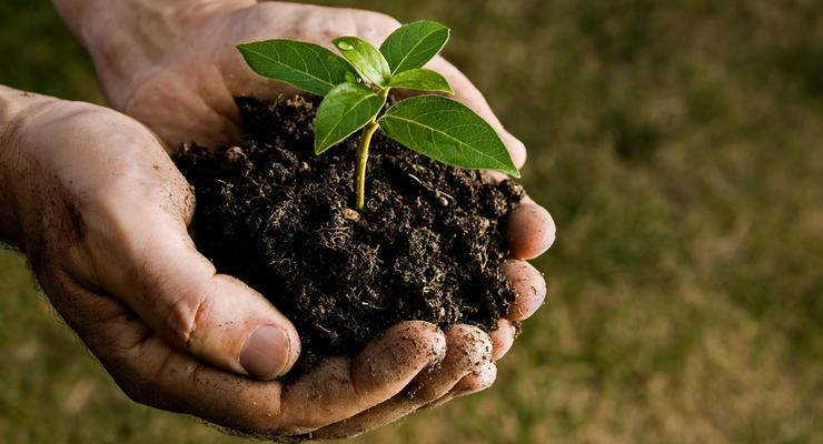 Садоводам будут компенсировать 80% стоимости саженцев - Гройсман