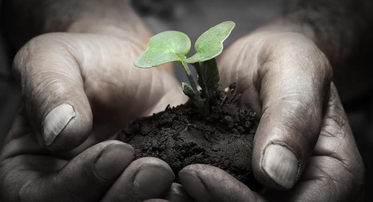 Как наследникам поделить сельхозземлю?