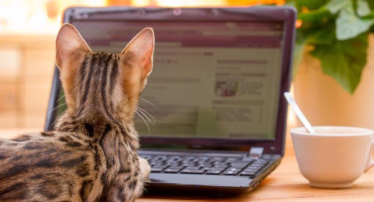 По 20 тысяч с хвоста: сколько можно заработать на породистых кошках