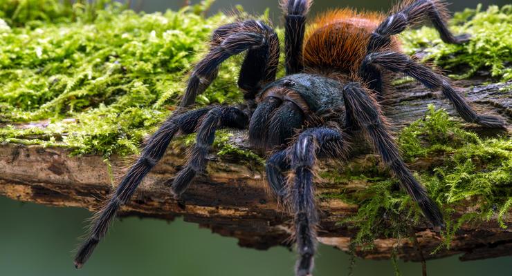 Боевые клещи и тарантулы: ТОП-5 экзотических товаров, которые экспортирует Украина