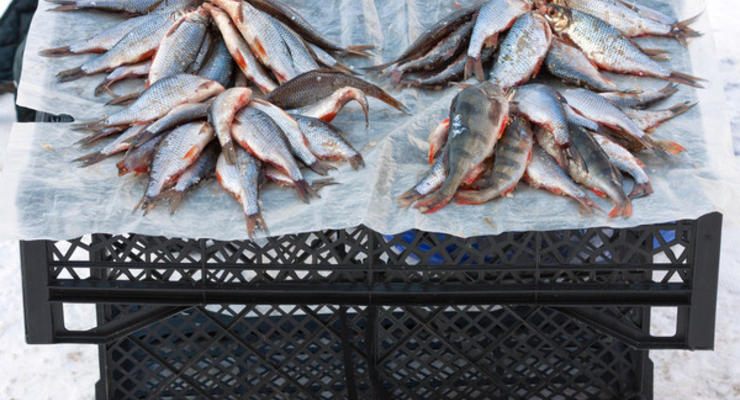 В украинских водоемах может исчезнуть рыба