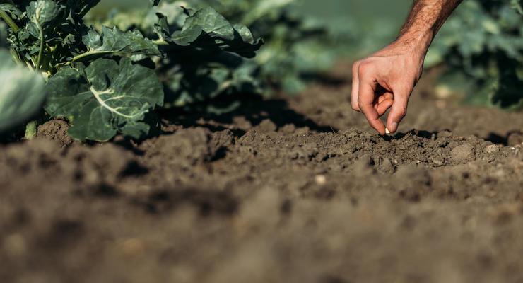 На каких условиях выдают агрокредиты в Украине