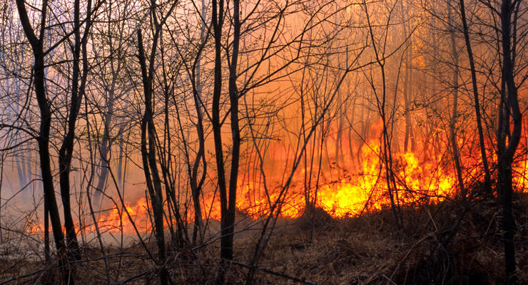 В Украине подсчитали убытки от лесных пожаров