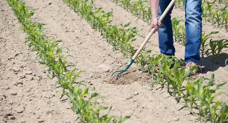 Сколько каждый год Украина теряет от деградации почвы