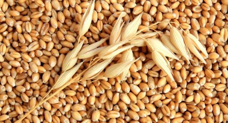 Урожай-2018: сколько Украине необходимо зерна для внутреннего потребления