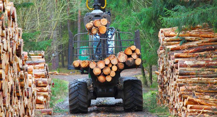 За контрабанду украинского леса грозит уголовная ответственность