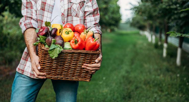 Украинские аграрии получат 1,7 млрд гривен от государства
