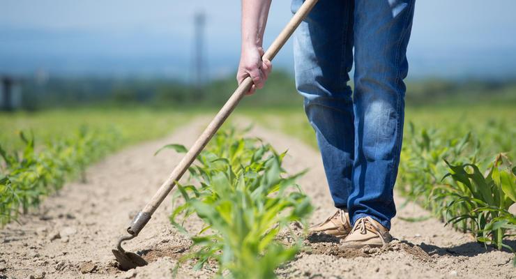 Аграрии просят Порошенко изменить условия выдачи дотаций