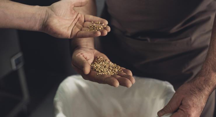 СМИ: В Аграрном фонде пропало зерно почти на 19 млн гривен