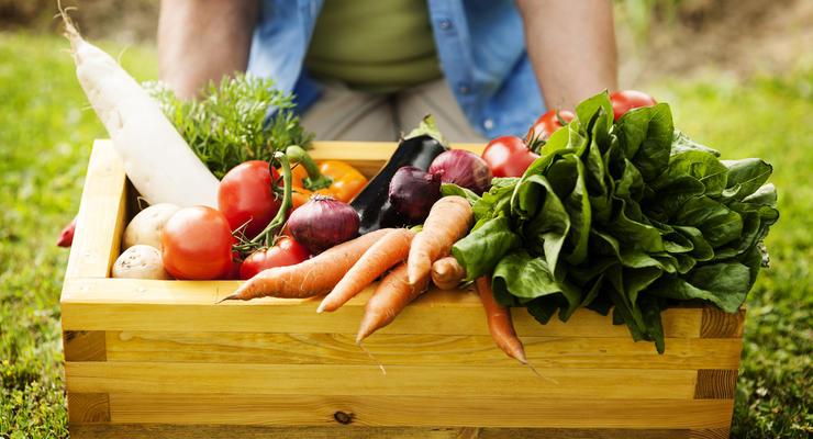 Низкий старт: В Украине обрушились цены на овощи