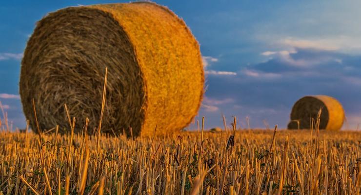 Когда может открыться рынок земли в Украине