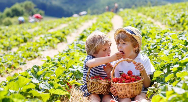 Насколько подорожали любимые ягоды украинцев