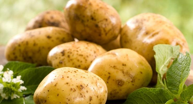 В Украине рекордно подорожала картошка