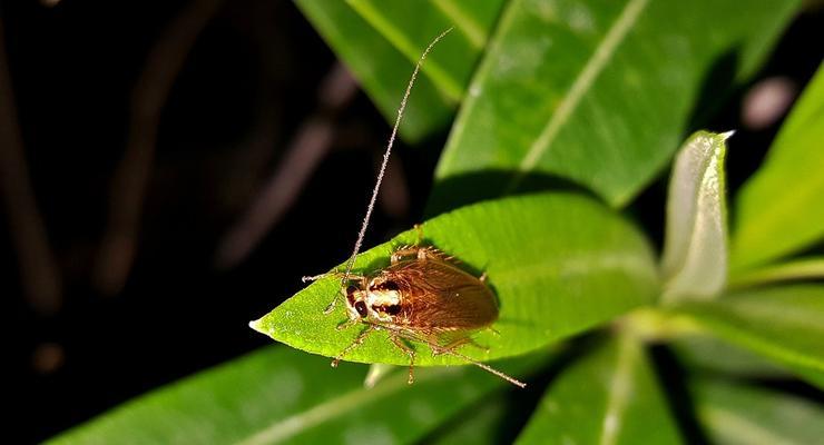 Сколько стоит потравить дома тараканов