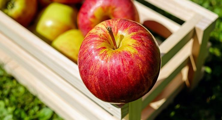 В Украине подорожали яблоки