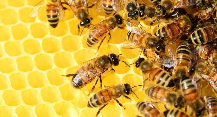 """""""Пчелиная экономика"""": Насекомые приносят до 500 млрд долларов"""