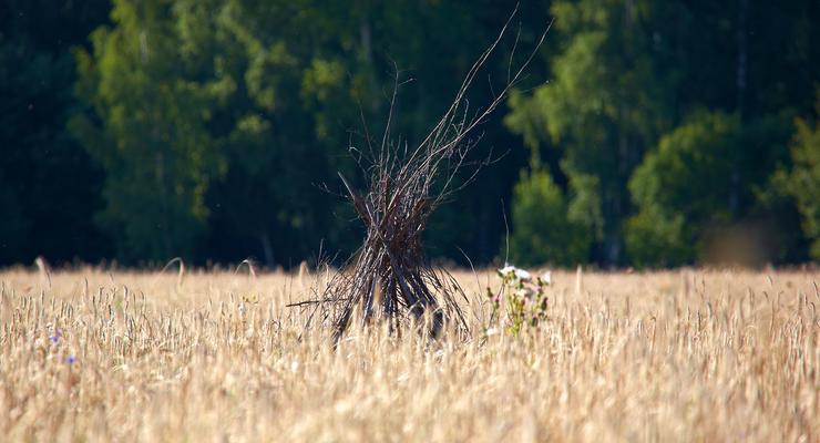 Экспорт украинского зерна достиг почти 21 млн тонн