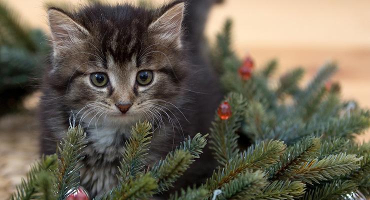 Сколько украинцы будут отдыхать на рождественские праздники