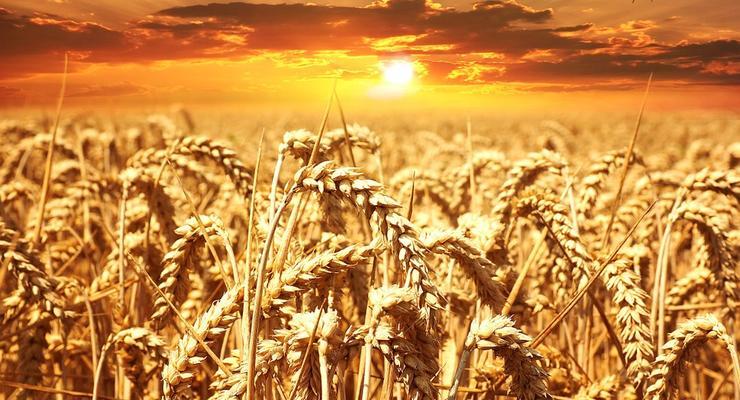 Экспорт зерновых повлиял на укрепление гривны