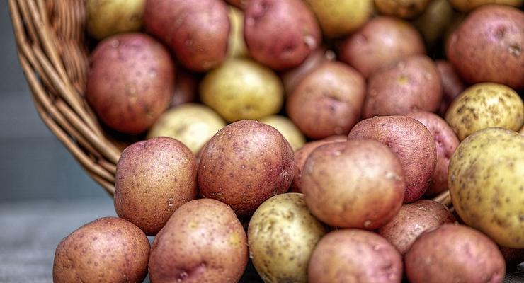Картофель резко подешевел