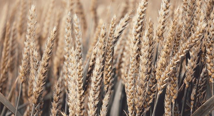 Экспорт украинского зерна превысил 35 млн тонн