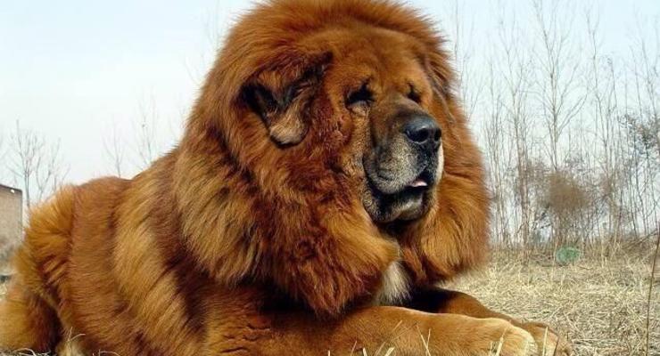ТОП-5 элитных пород собак для оплаты коммуналки