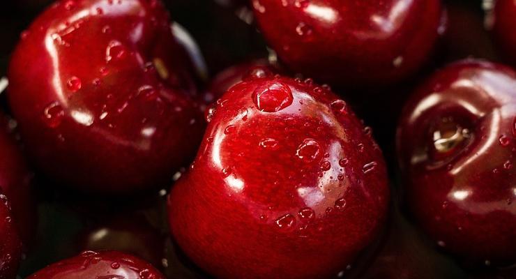 Украина вошла в ТОП-3 поставщиков вишни в мире