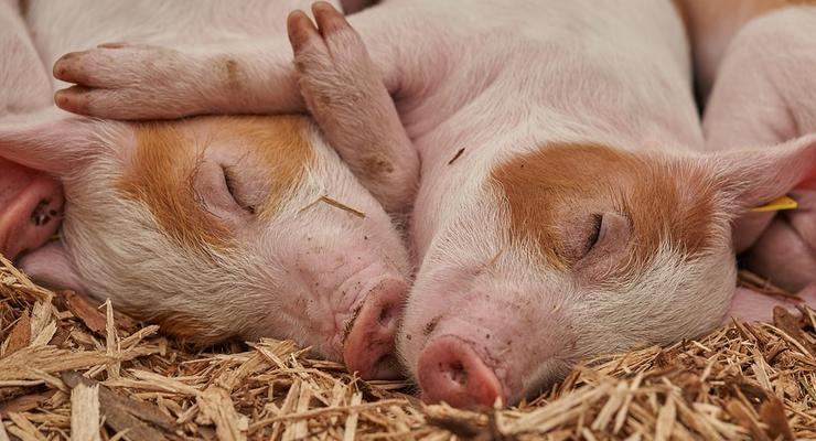 Свинина подешевела на 4% за неделю