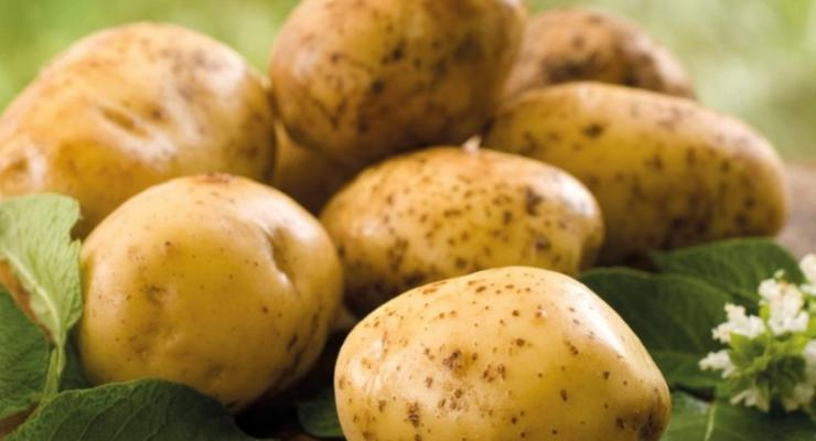 В Украине значительно подешевел картофель