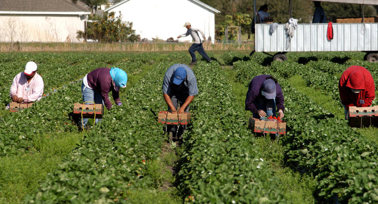 Рада облегчила трудоустройство украинцев за рубежом: О чем речь